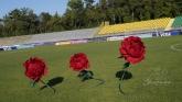 Цветя в бордо за фон